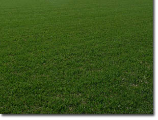 Why Triangle Turf Is Your Best Choice For St Augustine Bermuda And Zoysia Gr Sod
