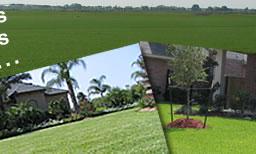St Augustine Grass Zoysia Grass And Bermuda Grass Sod