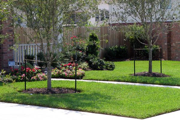 St  Augustine Grass, Zoysia Grass, and Bermuda Grass Sod